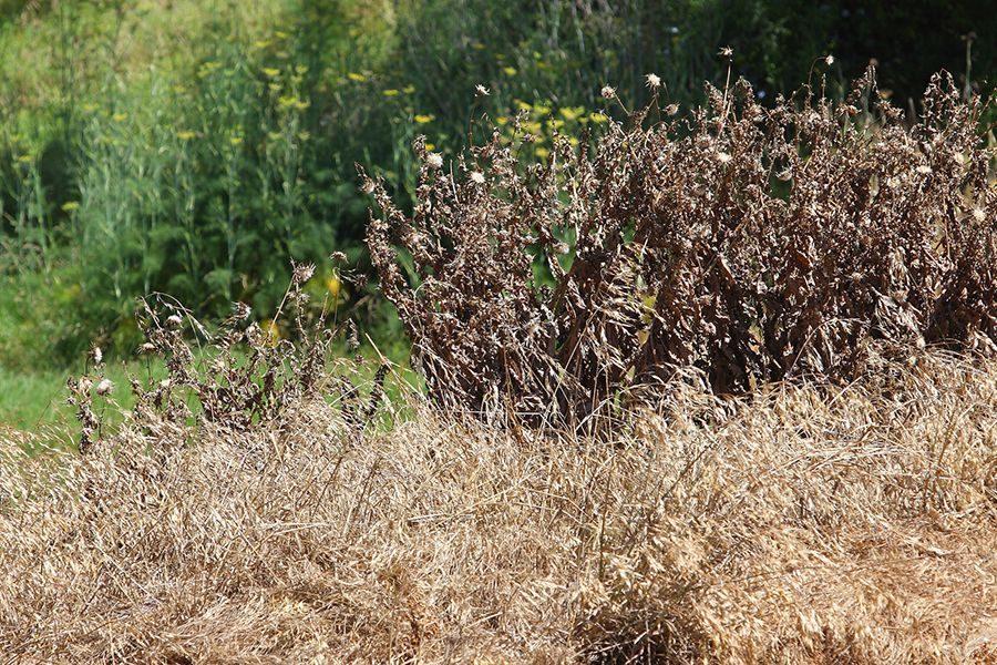 Россельхознадзор наказал агропредприятие за сорняки