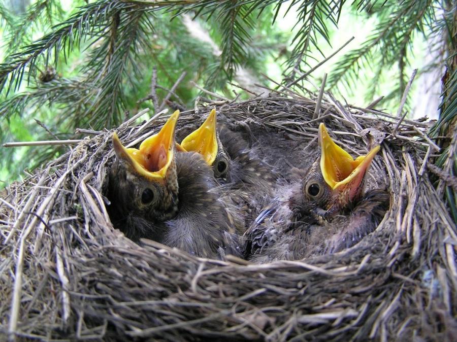 изумруд, птицы их птенцы и гнезда картинки совершил свою головокружительную