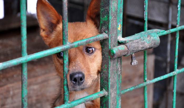 Уже два года я не подкармливаю бродячих собак и никогда больше не буду этого делать, - признался корреспондент кс