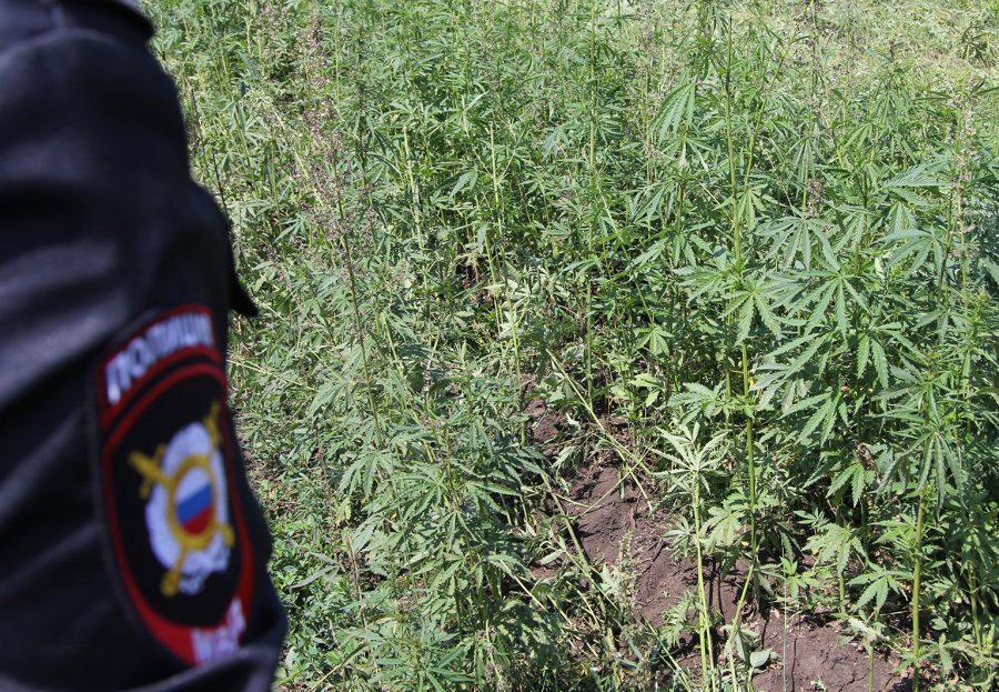 Конопля культивация рф рост куста марихуаны