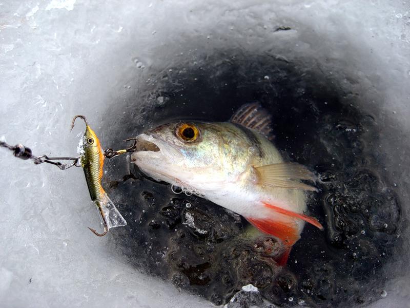 Смотреть видео ловля на балансир зимой